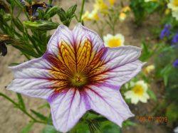 Farbenfrohe Artenvielfalt auf dem Hof