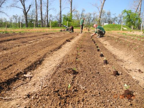 Auswahl an Gemüsen, Früchten und Kräutern