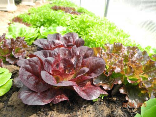 Gemüseproduktion in vollem Gange