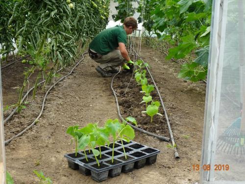beim pflanzen