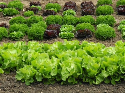 Vielfalt an Pflanzen, Kräutern, Obst und Gemüse