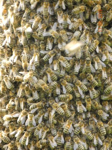 Unsere Bienen bei der Arbeit
